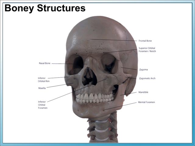 Facial Anatomy Aesthetic Care